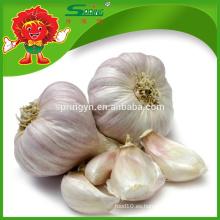 El ajo blanco natural de la cebolla del ajo fresco ajo vegetal de las frutas para la venta