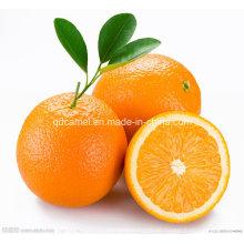 Hochwertige leckere Navel Orange