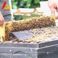 OEM que embala la miel dulce pura de la azufaifa