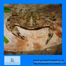 Gefrorene leben charybdis japonica