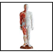 Acupuncture et modèle musculaire (M-1-55)