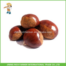 Heißer Verkauf Chinesischer frischer Kastanie verpackte im Jute-Beutel-Markt-Preis