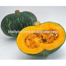 MPU09 Юаньхуа темно-желтый свежий гибрид сладкой тыквы семена компании