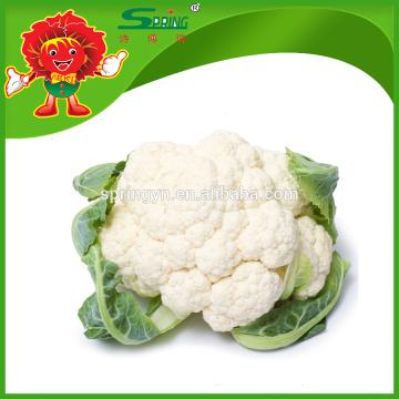 Branca, couve-flor, topo, classe, flor, legumes
