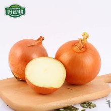 Supplier onion fresh yellow onion in bulk export