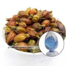 Azul de Gardenia - azul del jazmín del cabo