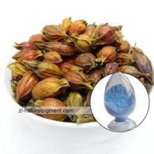 Gardenia Blue - Cape Jasmine Blue