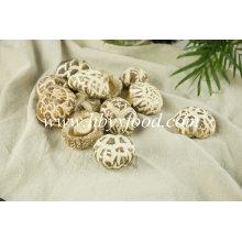 Les meilleurs produits agricoles de champignon de fleur blanche séchée de légumes