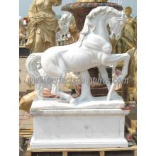 Escultura de piedra del animal del caballo de mármol para la estatua del jardín (SY-B158)