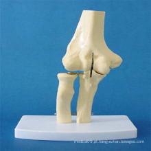 Articulação do cotovelo humano constituem peças modelo de anatomia do esqueleto