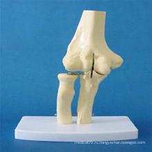 Модель анатомии скелета человека