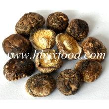 2.0-2.5cm Dried Smooth Shiitake Mushroom