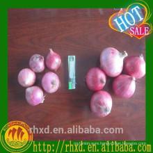 Red Onion Fresh Onion Export to Dubai