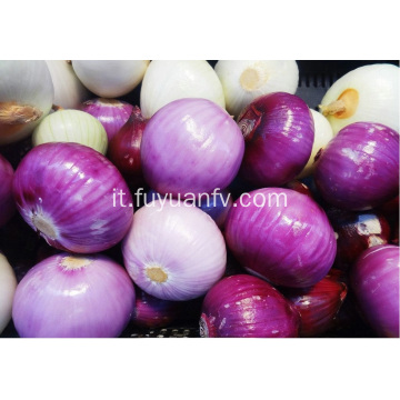 Fresh Good Qulality Red Onion