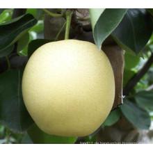 Frische Huang Guan / Crown Birne mit guter Qualität zum Verkauf