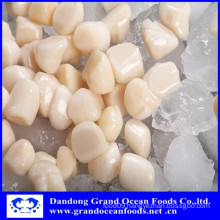 Frozen high quality IQF scallop meat