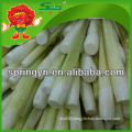 2015 fresh Water bamboo shoot organic green vegetables