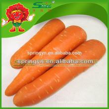 China Zanahoria exportador zanahoria roja orgánica