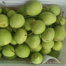 Vente chaude fraîche Shandong Poire couleur verte