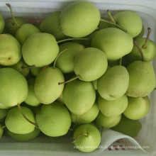 Hot Sale Fresh Shandong Pear Green Color