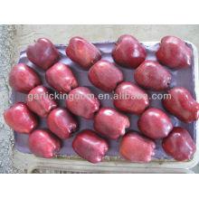 Продаем свежее яблоко / яблоко huniu в большом количестве яблоко низкой цены