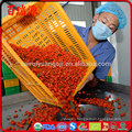 Benefits of dried goji berries dried goji berries trader joe's raw organic goji berries