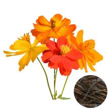 Top quality 1000 seeds  Mixed Color Garden Plant Cosmos sulphureus flower seeds