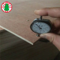 915-2135 mm  Bingtangor CC plywood