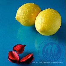 citrons en gros
