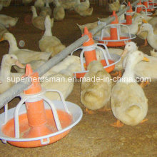 Poultry Equipment for Duck and Goose