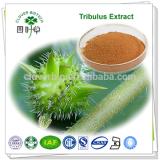 100% Pure Natural Tribulus Terrestris Extract