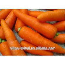 Fresh cenoura para venda