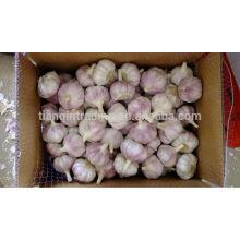 10kg carton garlic for Sale, 2014 Crop Garlic, Purple Garlic