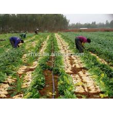 2015 New Chinese Fresh White Radish Price
