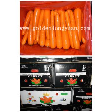 Nouvelle carotte fraîche 2016 (grade S et grade M)