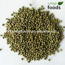 New Crop Mung Beans Price