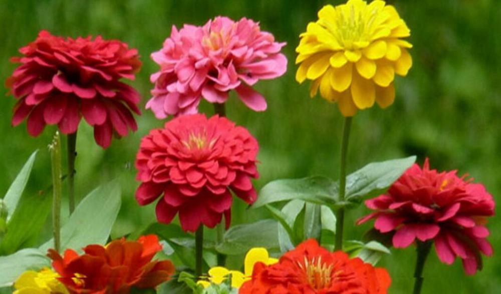Can flower seeds be planted in summer