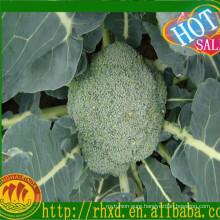green broccoli for dubai