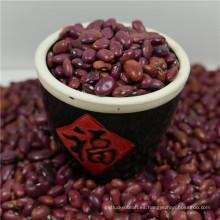 Nuevos granos de riñón rojos pequeños de la cosecha de China