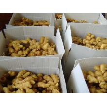 New Crop Fresh Ginger (100G y más)