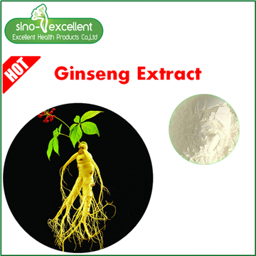 Panax Ginseng Berry Extract powder