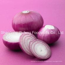 2016 Fresh Red Purple Onion