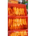 Top Quality Fresh Carrot