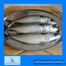 IQF peixe congelado (cavala do Pacífico)