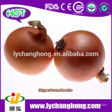 2014 Fresh Red Onion Supplier/Lowest Price Onion/China Fresh Red Onion