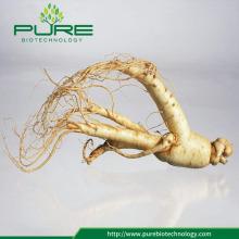 Wild organic Panax Ginseng root /Ginseng slice