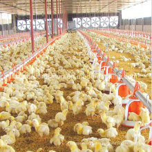 High Quality Automatic Poultry Control Shed Equipment for Broiler