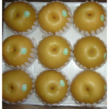 18kg/Carton Fresh Feng Shui Pear