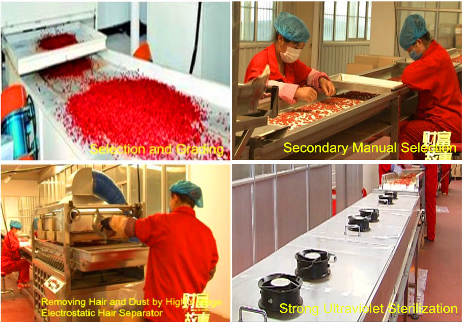 Goji berry Selection, grading,removing hair, manual selection and sterilization process