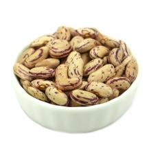 China nueva cosecha luz de buena calidad moteada Pinto Kidney Bean (muestras gratis para el evento)